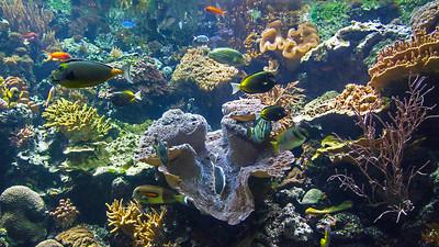 Jellies & Other Aquatic Life